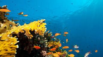 Verneområder går til havs
