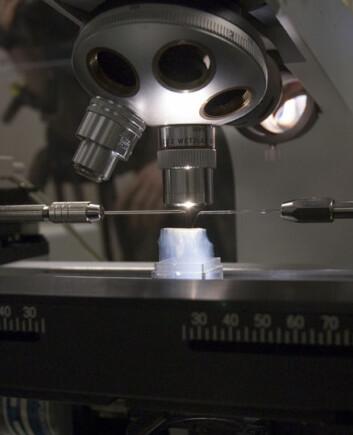 """""""Spesielle nåler styres av datamaskiner for å kunne skjære ut seksjoner av aerogel med stor nøyaktighet. Seksjonene inneholder forskjellige kometpartikler."""""""