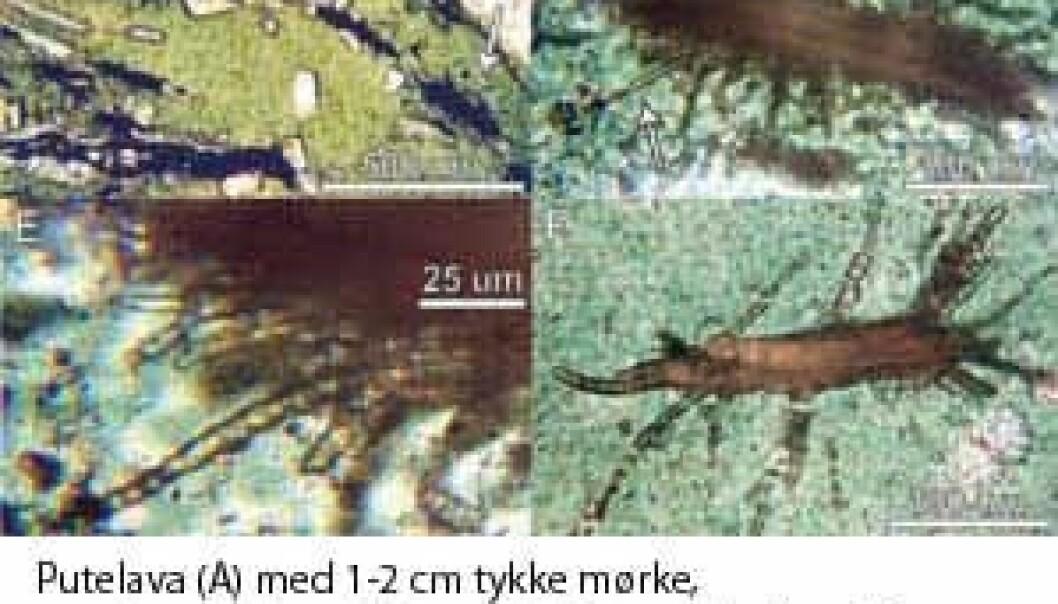 Organiske spor funnet etter 3,5 milliarder år