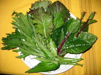 Asiatiske grønnsaker på norske tallerkener kan blir mer vanlig i framtida. (Foto: Alena Gibalova)