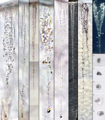 """""""Dette bildet viser forskjellige kometpartikler og sporene de har etterlatt seg i aerogel-materialet som fanget dem opp ombord på romsonden Stardust i 2004."""""""