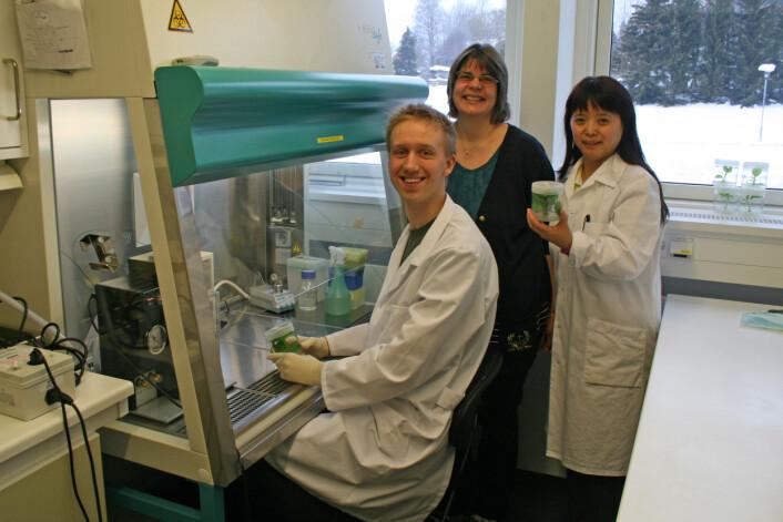 Jakten på en ny vaksine. Fra venstre Even Sannes Riiser, Sonja Klemsdal og Jihong Liu Clarke. (Foto: Erik Lysøe)