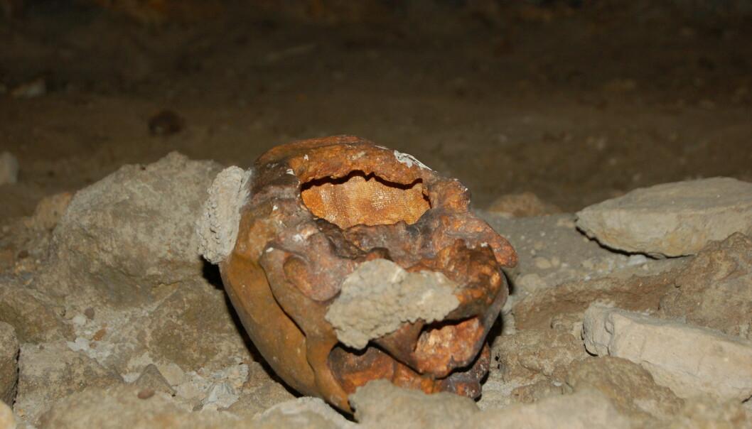 """""""Denne skallen funnet utenfor Roma ble i 1938 - feilaktig - tolket som restene av rituell kannibalisme, og satte igang spekulasjoner om neandertalernes åndsliv. Diskusjonen går fremdeles. Foto: Erik Tunstad"""""""