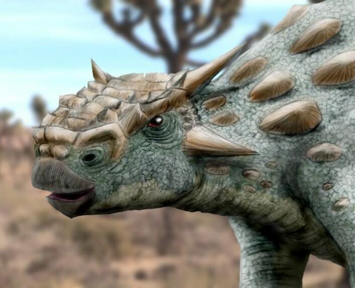 """""""Fossilet etter denne dinosauren, Minotaurasaurus ramachandrani, er opphavet til kontrovers i forskermiljøene (Illustrasjon:Arthur Weasley, Wikimedia Commons)"""""""