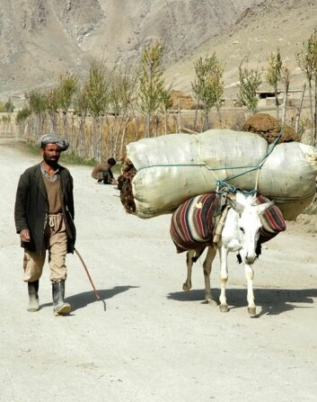 – Det er ikke lett å forklare en afghansk bonde hva Nato gjør og hvem vi er. Krigen har for mange ansikter, sier UiS-forsker og offiser Lillian Katarine Stene (Foto: Privat).