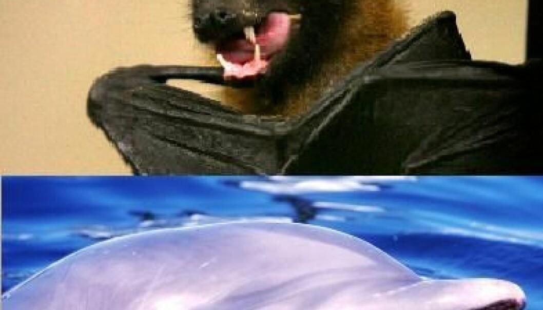 Ulike dyr - samme utvikling