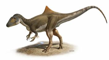 Slik mener forskerne at Concavenator så ut, med pukkelrygg - og vedheng på armene, muligens i form av primitive fjær. Den levde for rundt 125 millioner år siden i tidlig Kritt. (Ilustrasjon: Raúl Martín)