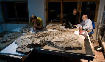 Bilde fra analysen av Concavenator-fossilet. Forskerne gjør sine undersøkelser i et rom i Science Museum of Castilla-La Mancha i Cuenca, Spania. Fra venstre ses studiens tre forfattere Fernando Escaso, Francisco Ortega og José Luis Sanz. (Foto: Francisco Ortega, National University of Distance Learning, Madrid)