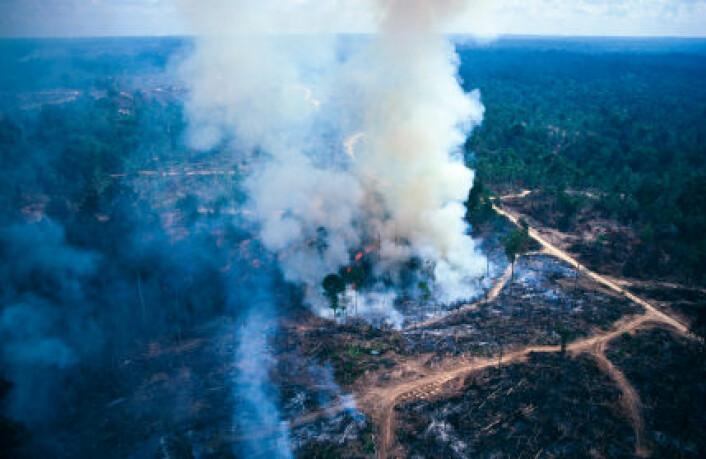 """""""Forskerne mener vi må gjøre kraftige utslippskutt, men sier også at det er fryktelig vanskelig å måle utslipp knyttet til hogging av skog. (Foto: iStockphoto)"""""""