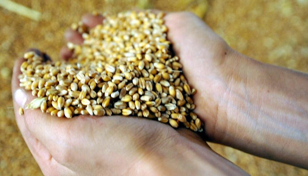 Bønder mot bioetanol