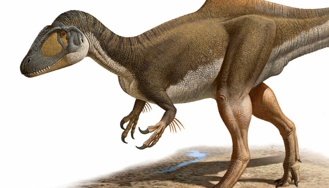 Slik mener forskerne at predatoren Concavenator så ut, med pukkelrygg - og vedheng på armene, muligens i form av primitive fjær. Den levde for rundt 125 millioner år siden i tidlig Kritt. (Ilustrasjon: Raúl Martín)