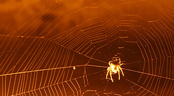 Eldste spor av spindelvev