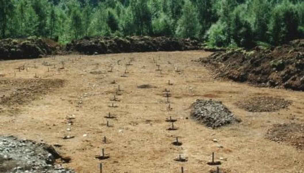Restene etter en stor seremonihall ble funnet i 1989: Dette er hullene etter et stort bolighus med plass til 30 storfe i fjøset, og huset er fra like etter Kristi fødsel. Har en boligdel for dagligliv pluss en seremonihall. Huset var 50 meter langt. (Foto: Terje Tvedt)