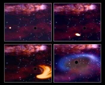"""""""En stjerne kommer for nært et sort hull og blir til en sky av gass. Litt av gassen slukes av hullet, mens mesteparten kastes ut igjen i rommet. (Illustrasjon: ESA)"""""""