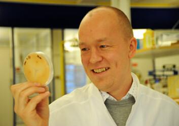 Ralf Kristensen og Veterinærinstituttet er i ferd med å utvikle raskere og billigere metoder for å påvise Fusariumsopp og mykotoksiner. (Foto: Håvard Simonsen)