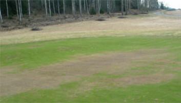 """""""Typisk vinterskade: Isskade på green (Losby Golfklubb)"""""""