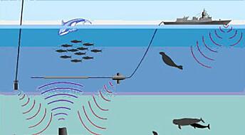 Sonarbruk reguleres for å sikre havmiljø