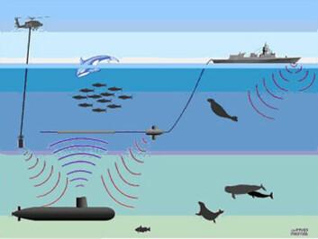 """""""Forsvarets nye fregatter i Fridtjof Nansen-klassen har ikke bare sonar montert i skroget, men også tauet sonar og helikopterdyppet sonar. Disse sender ut kraftige lydpulser, som potensielt kan skade fisk og sjøpattedyr. Ny forskning leder nå til begrensninger i bruken i Norge. Illustrasjon: Petter Kvadsheim, FFI."""""""