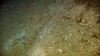 Skadd rev på Troms III. (Foto: MAREANO/ Havforskningsinstituttet)
