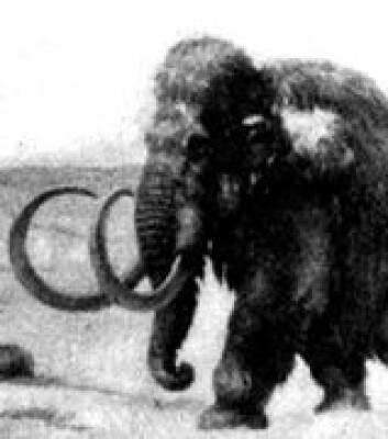 """Mammuten var et mektig dyr."""