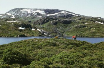 Fra arkeologisk forundersøking av einrundt6000 år gammal steinalderbuplass ved Vestre Gyvatnet i Blåsjø-området i Setesdal Vesthei. Terrengplassereinga er typisk for buplassar brukt isamband med villreinjakt i fjellet i Sør-Norge i forhistorisk tid. (Foto: Arkeologisk museum, Universitetet i Stavanger)