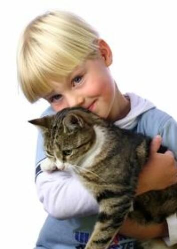 Høysnue hos barnet er den vanligste årsaken til at enkelte familier aldri skaffer seg kjæledyr med pels.