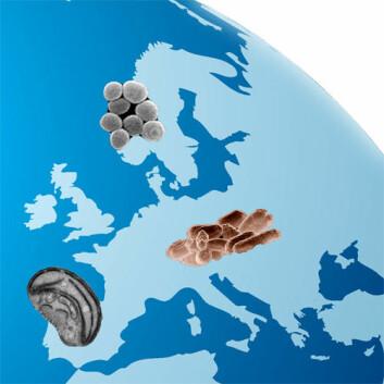 Ifølge danske forskere er også mikroskopiske organismer forskjellige verden over. (Illustrasjon: Colourbox / Per Byhring)