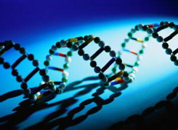 """""""Bjørnens DNA er sentralt i studiet av Pasvikdyrene."""""""