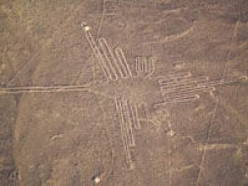 De mystiske tegningene som Nazca-sivilisasjonen etterlot seg kalles Nazca-linjer og kan kun sees fra lufta. De viser figurer eller geometriske former og har gitt opphav til mange fantasifulle spekulasjoner. (Foto: iStockphoto)