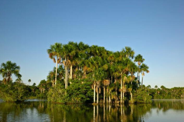 Støv fra Sahara gjødsler Amazonas. (Foto: iStockphoto)