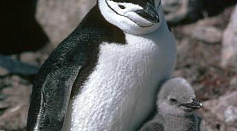 Overraskende livlig i Antarktis