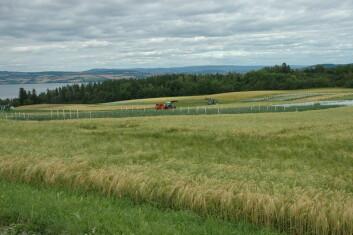 Den nye gjødslingsnormen har ført til en kraftig reduksjon i bruk av fosfor, spesielt innen kornproduksjon. (Foto: Jon Schärer)