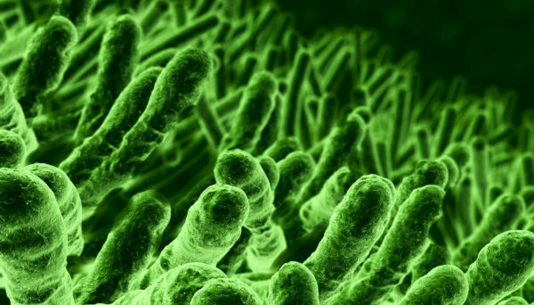 E.coli-bakterier. (Illustrasjonsfoto: iStockphoto)
