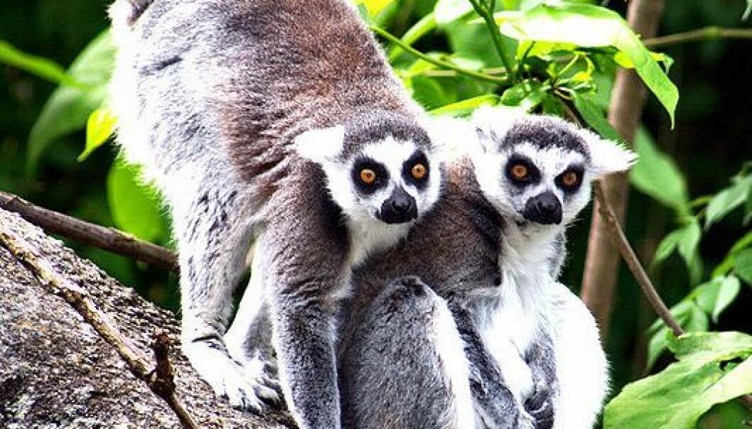 På flåte til Madagaskar