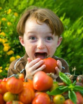 Modne tomater inneholder også mye MSG, og har derfor mye umami-smak. (Illustrasjonsfoto: iStockphoto)