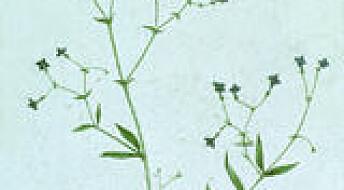 Plante setter fart i fødselen