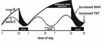 """""""Ifølge den mest brukte søvnmodellen styres søvnen først og fremst av to prosesser, nemlig mengden adenosin (prosess S), samt døgnrytmen vår (Prosess C). Samspillet mellom disse to prosessene fører til at vi veksler mellom å sove (mørke områder) og være våkne (hvite områder). Lider man av søvnmangel, bygger man opp et større søvnpress i form av mer adenosin, noe som fører til en dypere søvn når man endelig sover."""""""