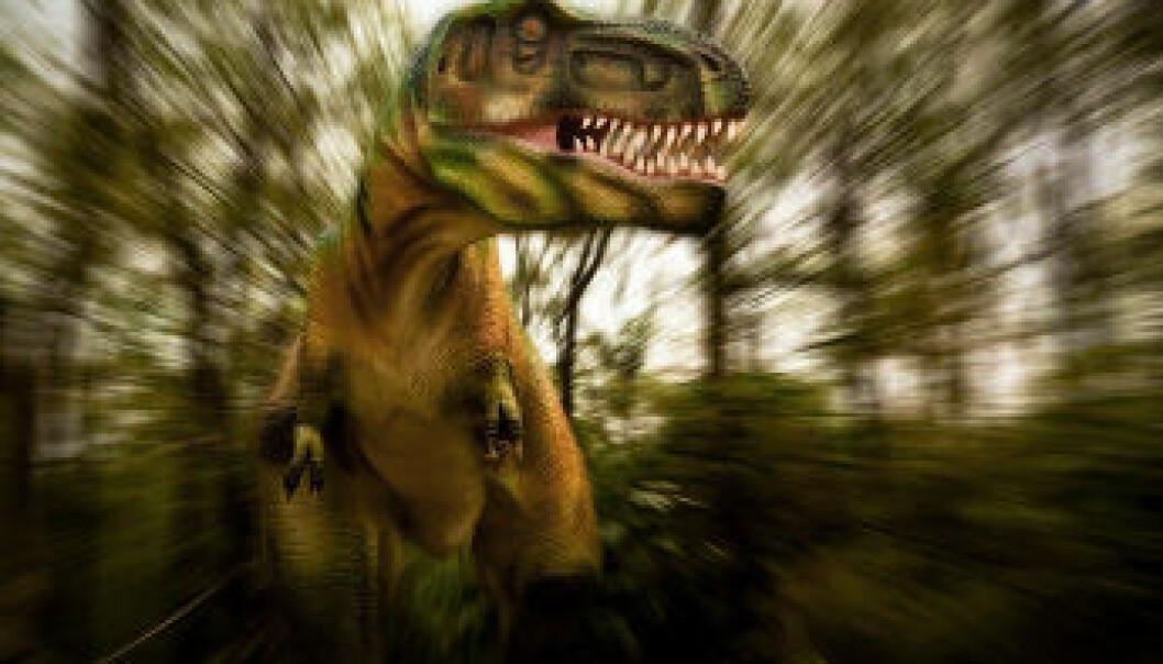 Tyrannosaurus Rex var et av unntakene som bekrefter regelen om plantespisende dinosaurer. (Illustrasjon: iStockphoto)