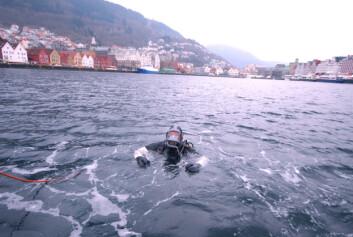 Byfjorden i Bergen. (Foto: Rolf Hordnes/Bergen kommune)