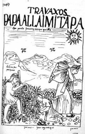 Potetdyrking i europeisk framstilling fra 1600-tallet.