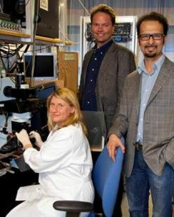 Erlend A. Nagelhus, Mahmood Amiry-Moghaddam og stipendiat Anna Thorén. (Foto: Gunnar F. Lothe)