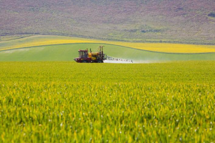 Plantevernmidler fra landbruket gir miljøgifter i ferskvann. Bilde fra sprøyting av en åker i Storbritannia.(Foto: iStockphoto)