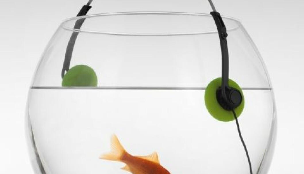 Rockekonsert for fisken