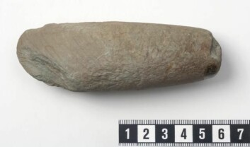 I graven fra jernalderen finner forskerne en grønnsteinsøks fra steinalderen. (Foto: Terje Tveit, Arkeologisk museum)