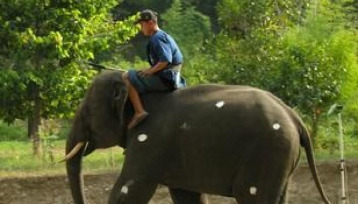 Løper eller går elefantene?