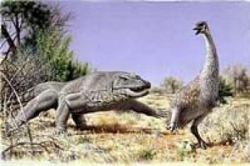 """""""To meter høye genyornis jaktes her av den sju meter lange øglen Megalania."""""""