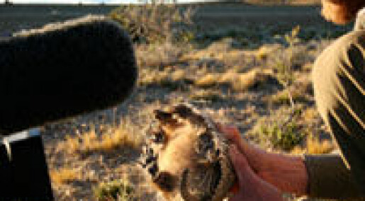 Feirer Darwin på Galápagos