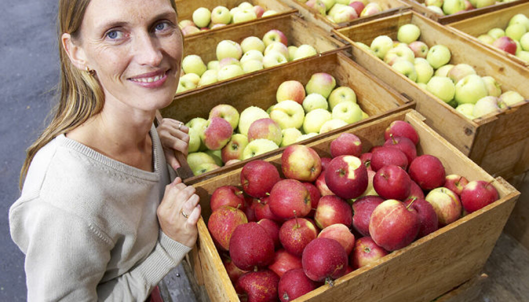 Antioksidanter opp i dagen