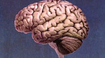 Dyslektikere har svekket arbeidsminne