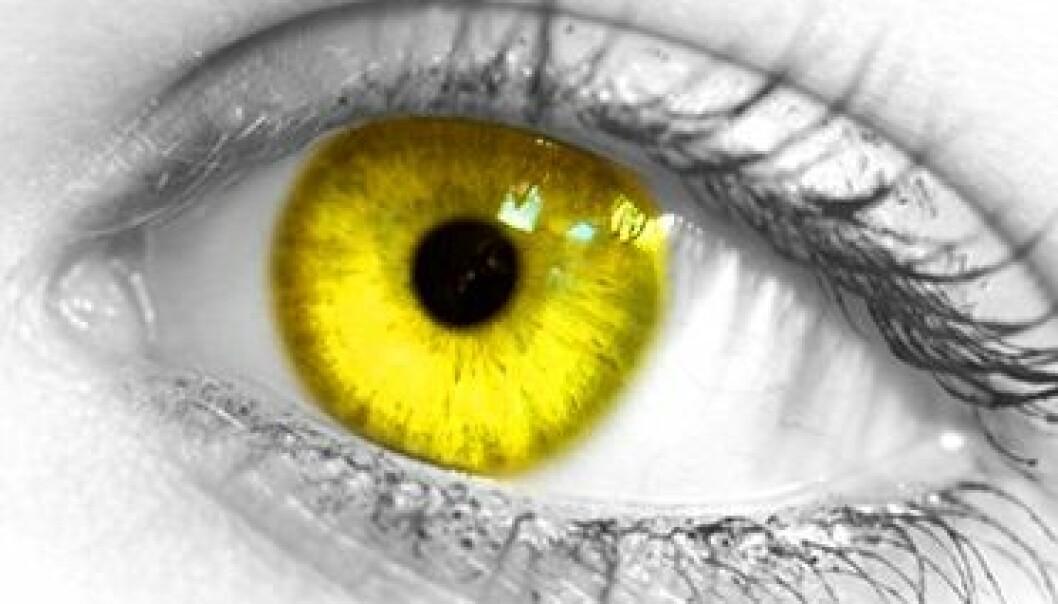 Hvorfor ikke gule øyne?
